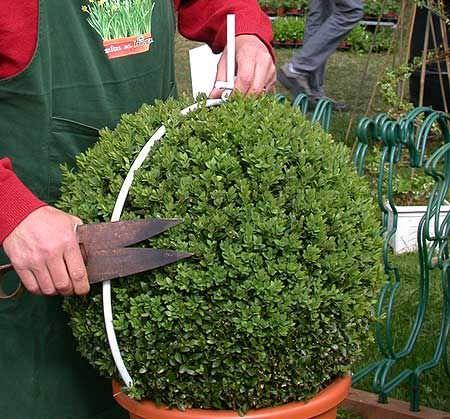 DIY-topiary-6